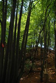 앵봉산 숲속여행