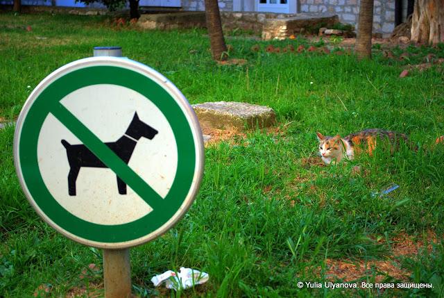 Никаких собак! Кошка соблюдает правила в Задаре