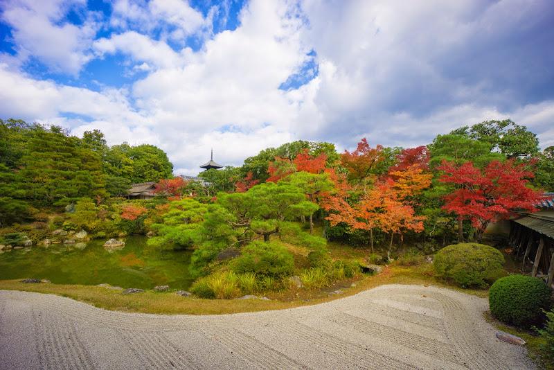 京都 紅葉 仁和寺 写真6