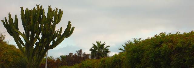 Gran Canarias Berge an einem nebligen Morgen, mit Pflanzen im Vordergrund.