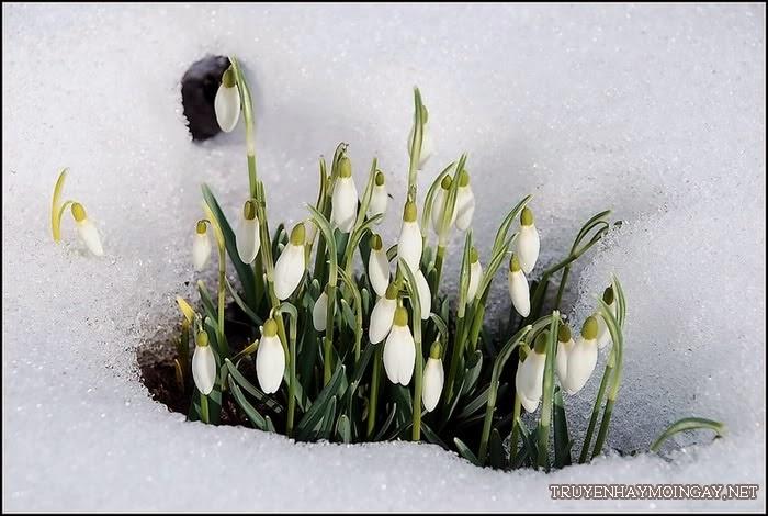 Ảnh Đẹp Hoa Mùa Xuân