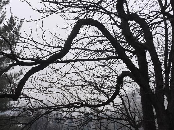 изгибы ветвей