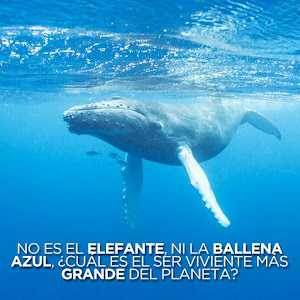 Who is Ballena Azul?