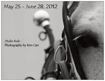 Mules Rule: Photography by Kim Carr