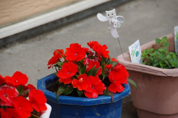 軒下を飾る花たち