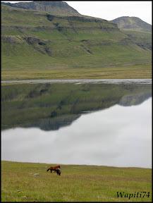 Un tour  d'Islande, au pays du feu... et des eaux. 13ter-Kirkjufell