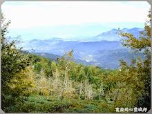 銀杏森林-山嵐、茶園、銀杏樹
