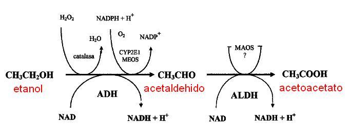 efectos del primer ciclo de esteroides