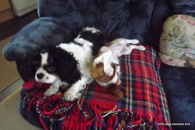Alfie and Lexie on the settee together
