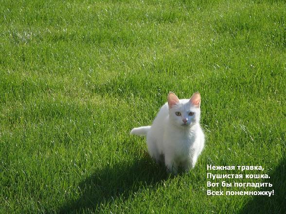 кошка белого цвета