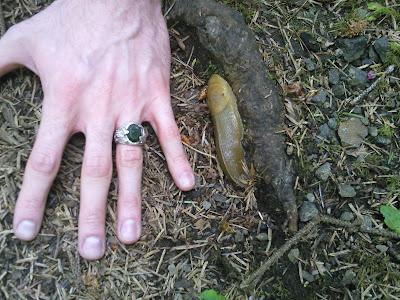 Big ol' banana slug