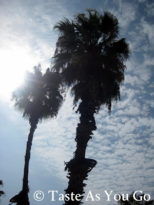 Palm Trees in Los Cabos, Mexico - Photo by Taste As You Go