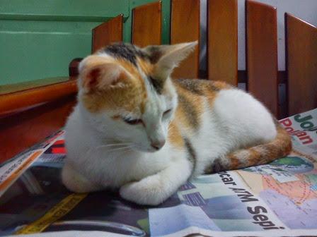 Geffy S Blog Jenis Kucing Yang Cocok Untuk Dipelihara