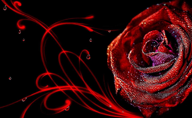 3d Rose Flower Wallpaper Wallpaper Background Gallery