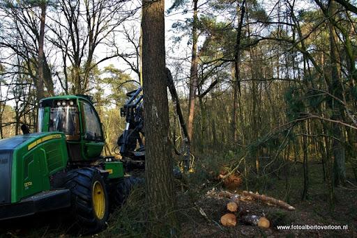 Houtoogst in de bossen van overloon 17-01-2012 (8).JPG