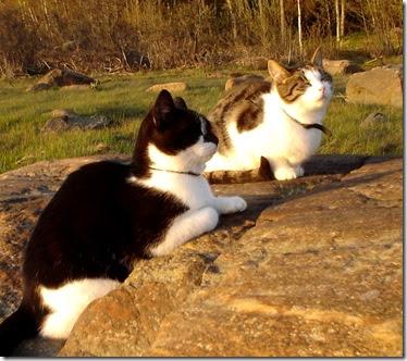carulmare, katter, klippor, stilla