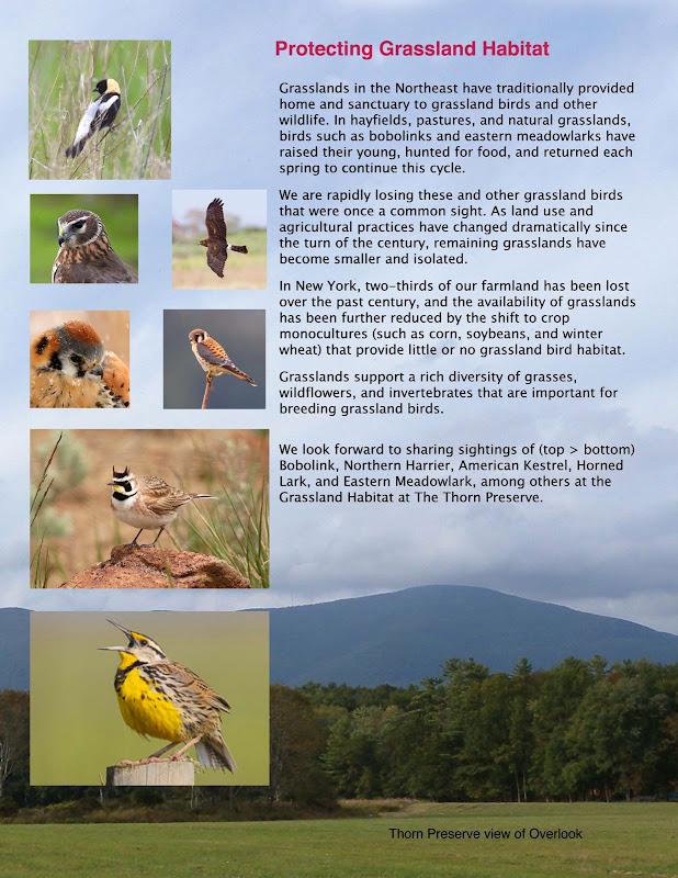 2013 fall newsletter pg 3