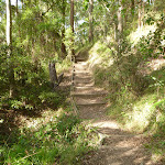 Timber steps and track near Rocky-high viewpoint by Lake Macquarie (389924)