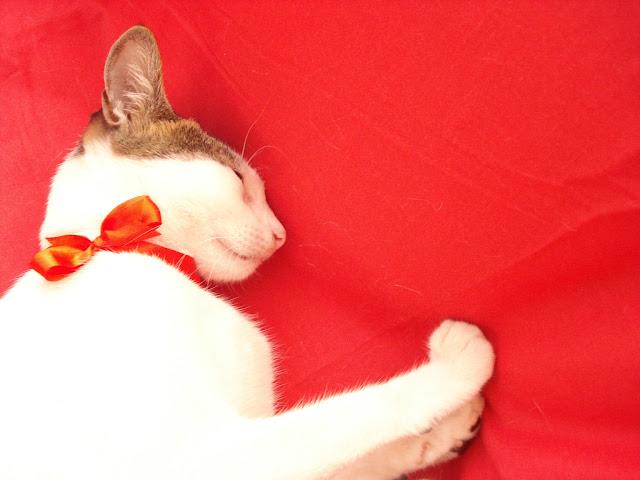 Teecup loves Munchkin.
