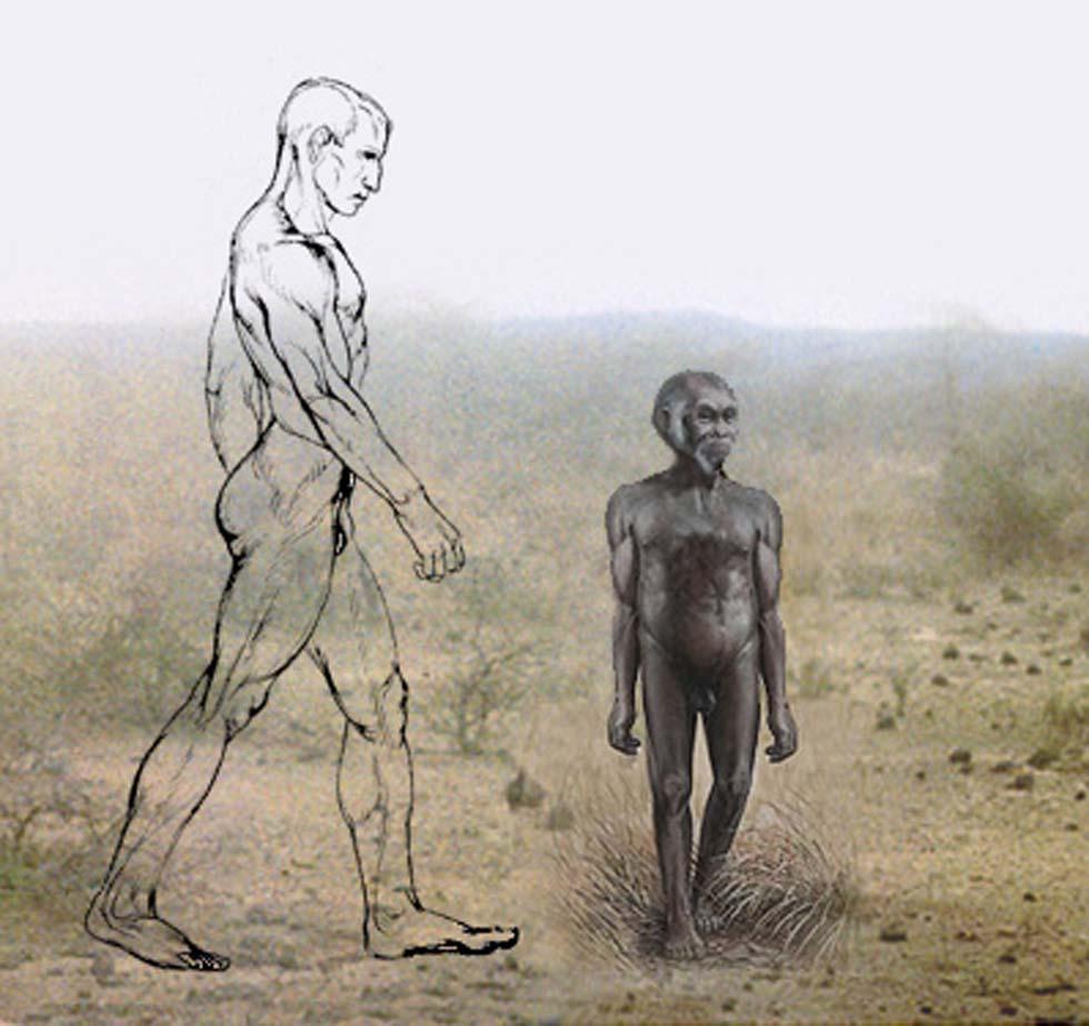 Resultado de imagen de homo floresiensis national geographic