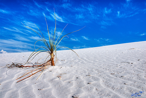 Фарфоровая Пустыня,Белая Пустыня