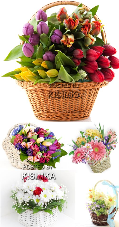 Stock Photo: Flowers in basket 12