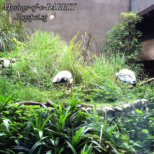 River Safari - Asia's First and Only River-Themed Wildlife Park