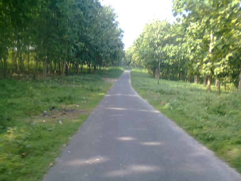 jalan dari jalan besar ke arah dusun gomang