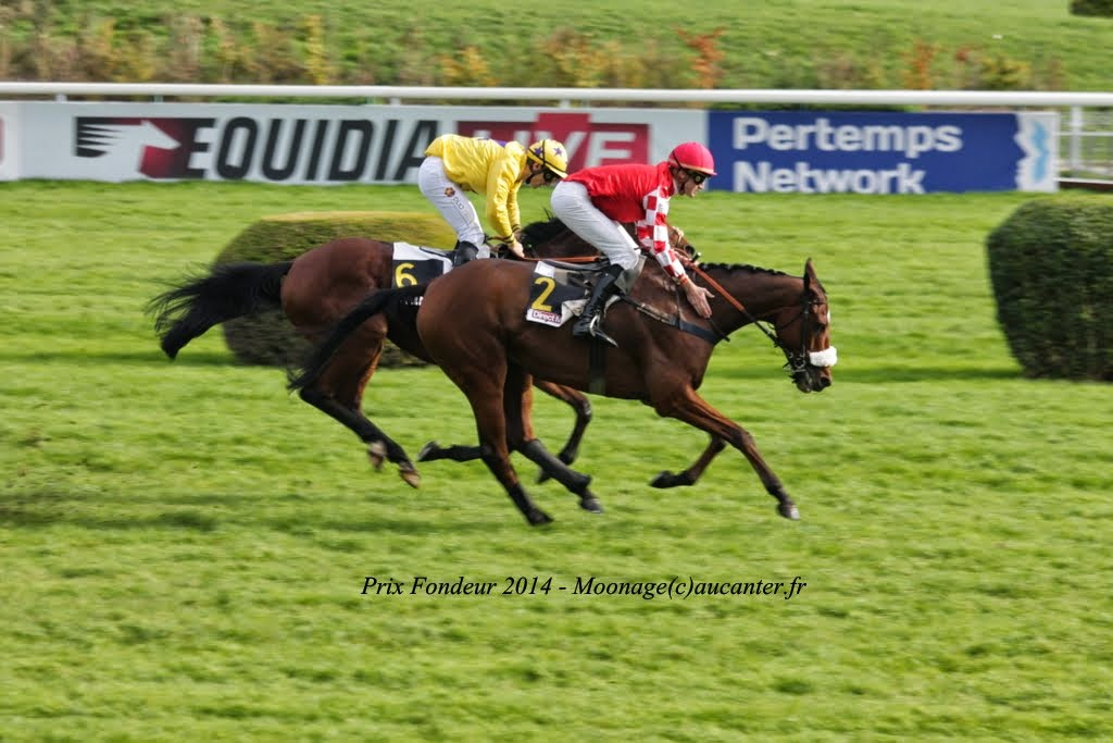 Photos Auteuil 2-11-2014 (48h de l'obstacle) IMG_5293