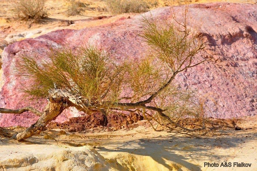 Достопримечательности Негева, цветные пески.
