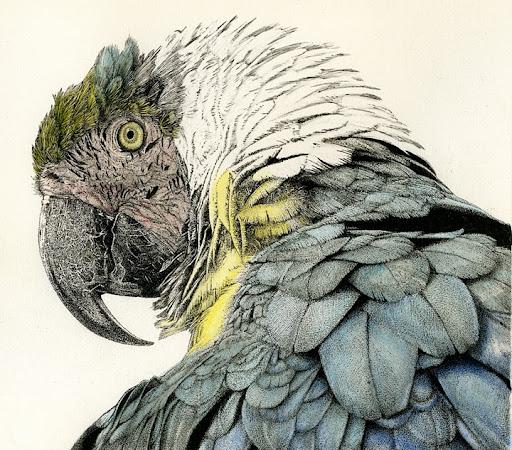 ParrotWIP-2014-03-25-08-40.jpg