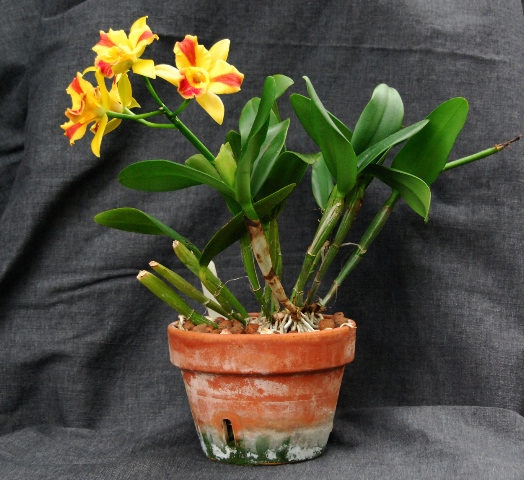 Растения из Тюмени. Краткий обзор - Страница 10 DSC_0003
