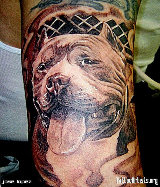 25 Pitbull Tattoo  Designs  Meanings  Pictures Gallery  Best