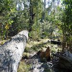 Fallen tree beside track (297656)