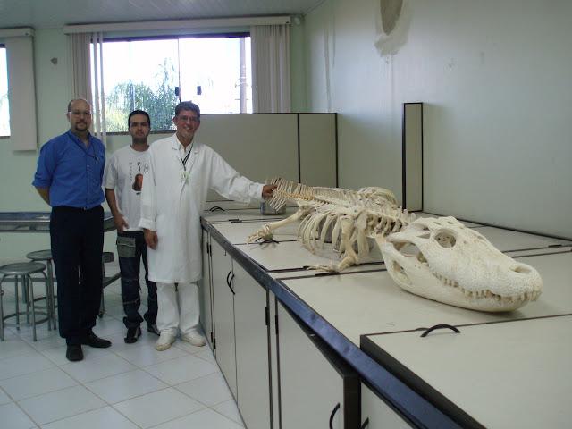 Questões e Fatos sobre Crocodilianos gigantes: Transferência de debate da comunidade Conflitos Selvagens.  - Página 3 4%252C20M