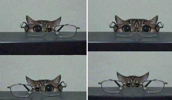 glasses-cat-gift