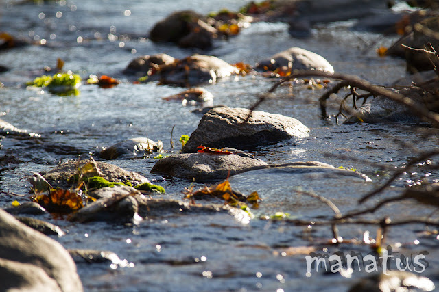 manatus foto blog río