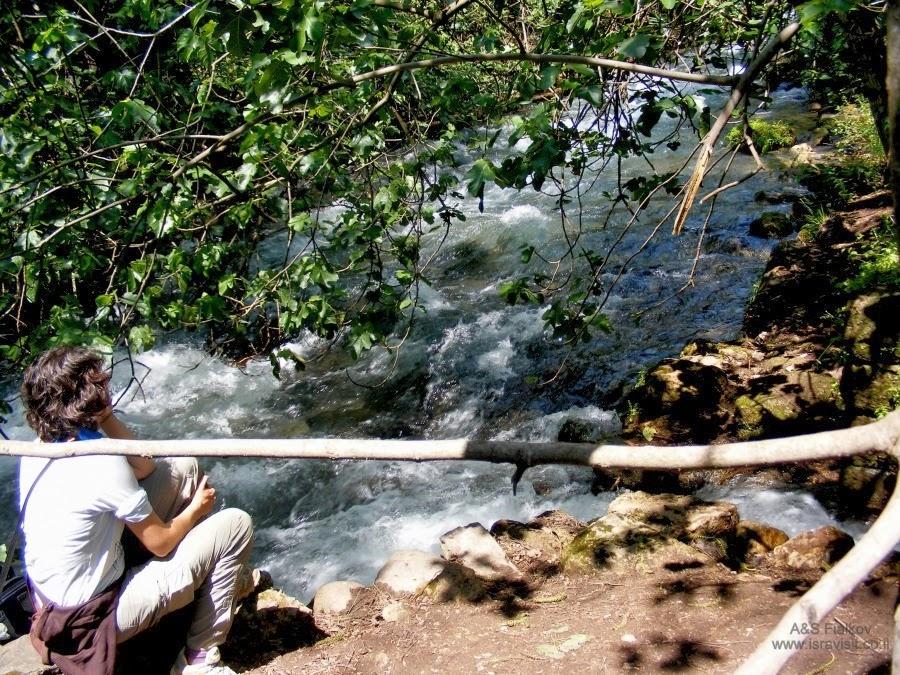 На ручью в Баниас. Экскурсия на Голанские высоты. Гид Светлана Фиалкова.