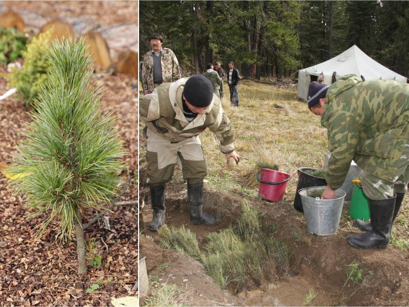 Ив Роше высадка деревьев