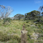 Walking along the Porcupine Track (263543)