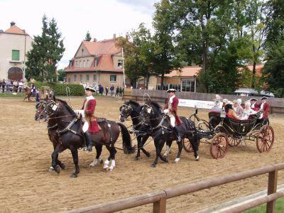 Hengstparade Moritzburg bei Dresden vierer Gespann