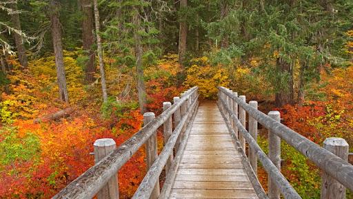 McKenzie River Trail, Willamette National Forest, Oregon.jpg