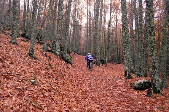 Ruta MTB por el Castañar de El Tiemblo, sábado 8 de noviembre 2014 ¿Nos acompañas?