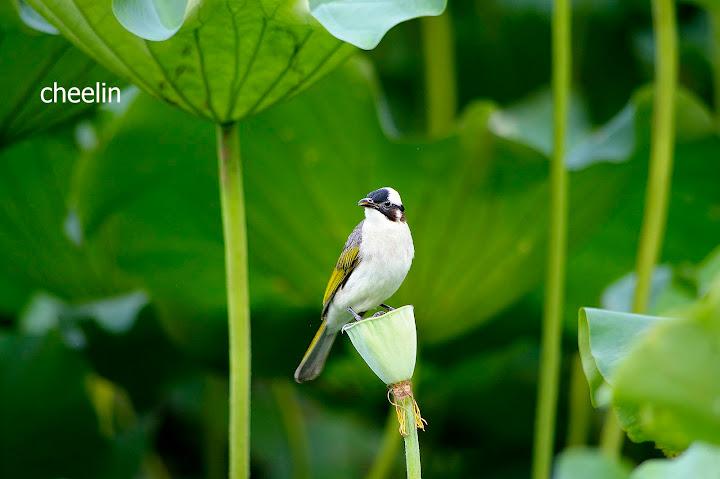 植物園賞荷‧打鳥‧拍貓