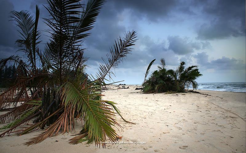 pokok nipah di tepi pantai Kuala Ibai