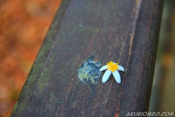 bunga diatas pagar kayu