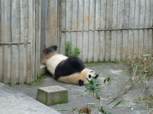 成都大熊猫繁育研究基地 zt - Jennifer - 雨夜相思客
