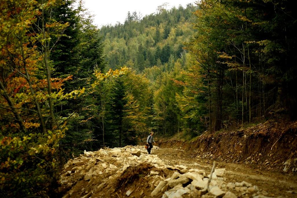Szlak na Magurkę Wilkowicką