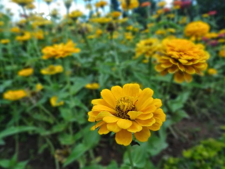 Hoa Đẹp Đà Lạt (Phần 2) - Dalat News