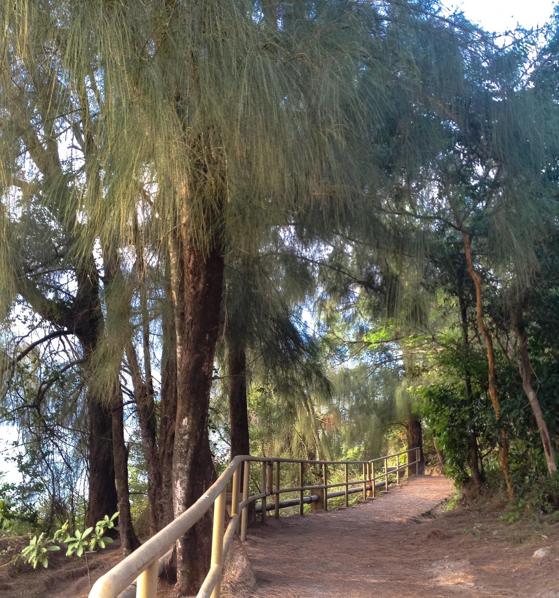 A peaceful trail near Pui O